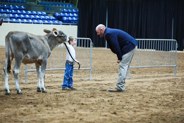 Junior Dairy Cattle