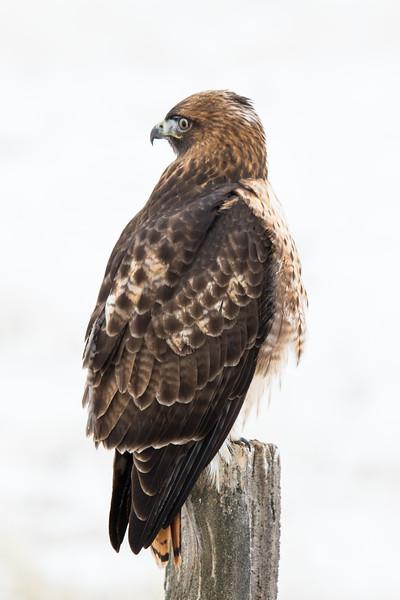 Sierra Hawks Winter 2018-7.jpg