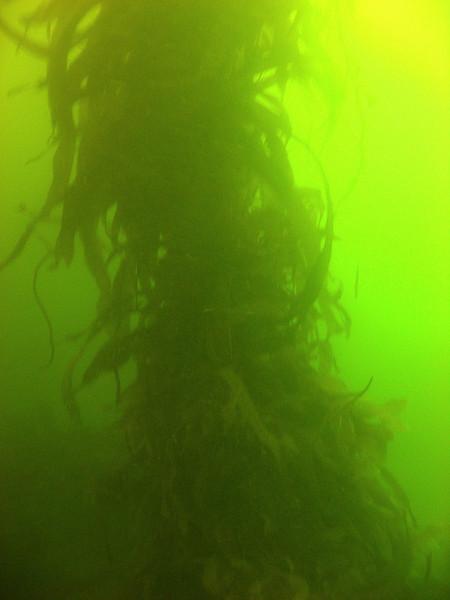 More kelp