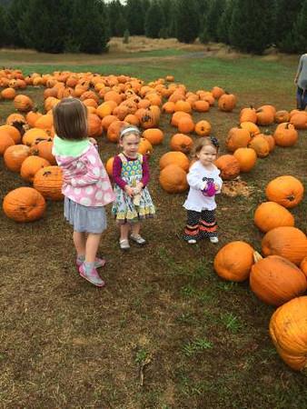 Pumpkin Patch - Berry Patch Farms - 10.12.14