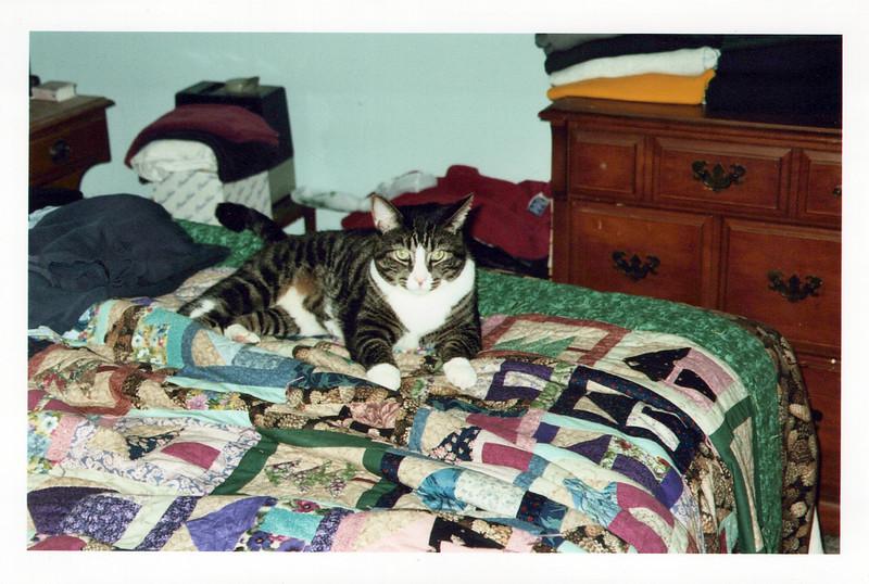 2005_Cats_0004_a.jpg