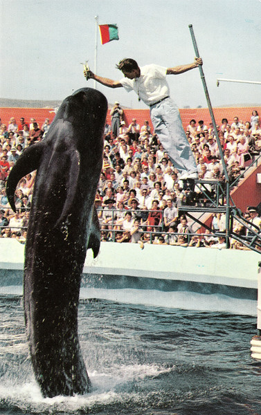 Bimbo the Whale