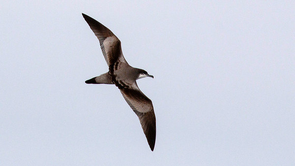 ABA Birds - Best Image