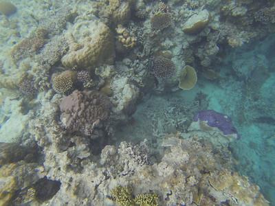 Judy's Great Barrier Reef Adventure