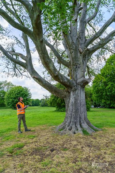 Greenwood Arboriculture