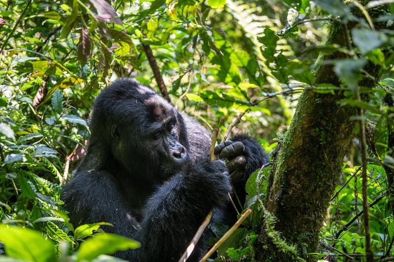 Uganda_T_Gor-249.jpg