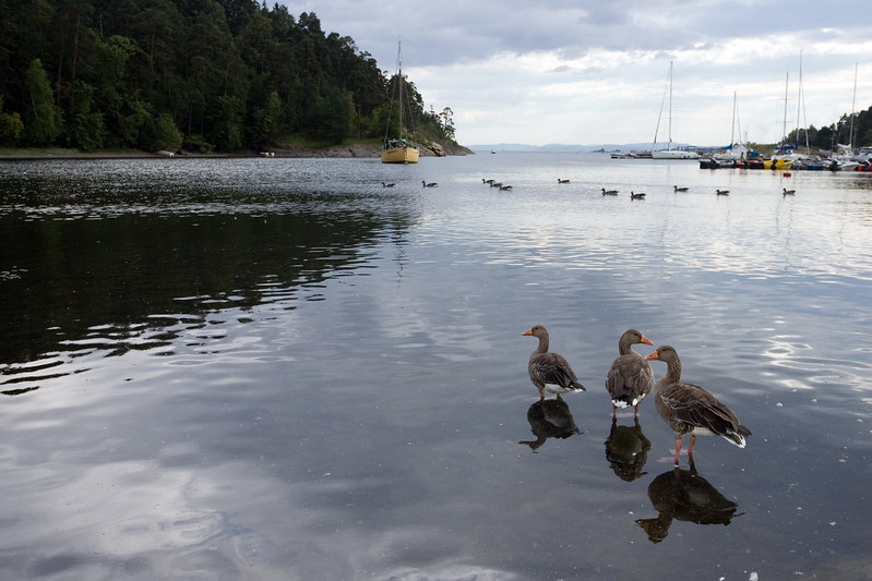 The Bygdøy peninsula, a short ferry trip from downtown Oslo, offers to the visitor very interesting museums as well as wonderful green spaces and beaches.