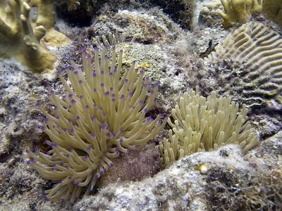 Daaibooi 20080526