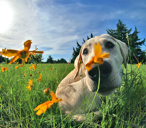Smelling The Flowers.jpg