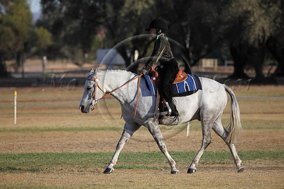 Western and Stock Horse Classes