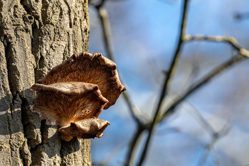 Fungii-41.jpg