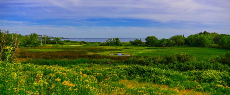 Maine Green 25