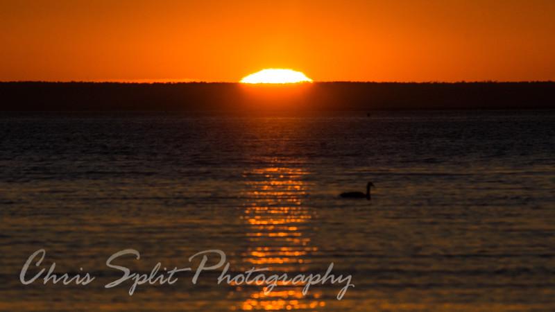 sunset goose (1 of 1).jpg