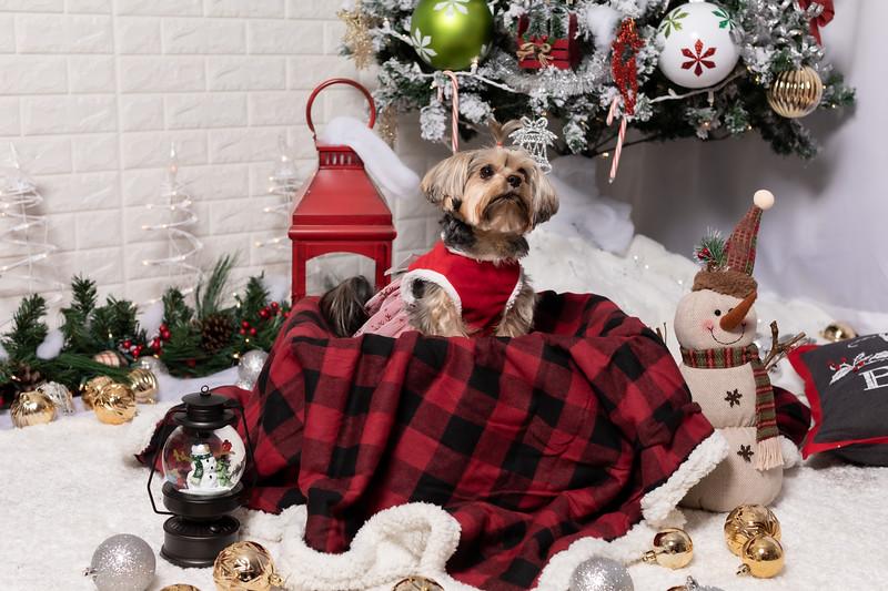 12.10.19 - Leide e Mel's (Mel Pet) Studio Christmas 2019 - -37.jpg
