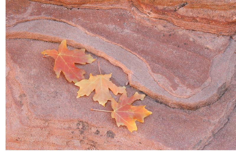 Leaves, Zion NP, Utah