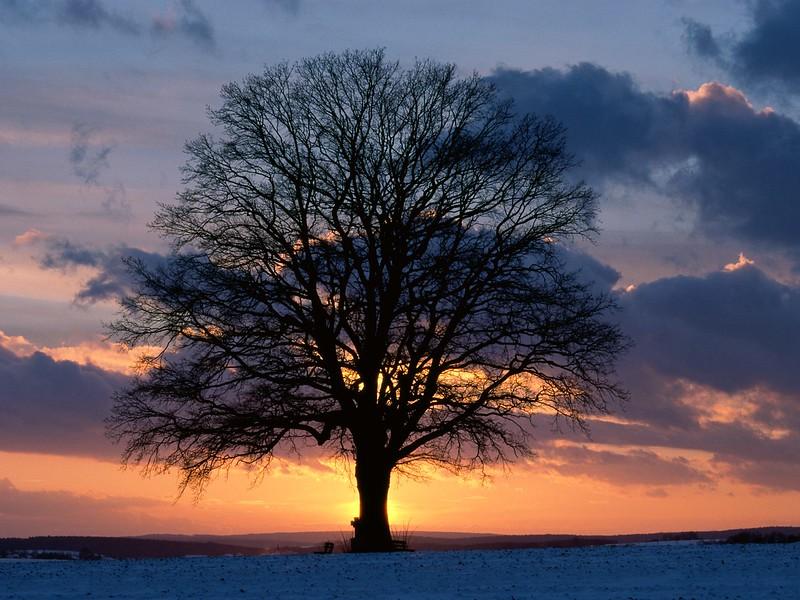 Lone Tree at Sunset.jpg