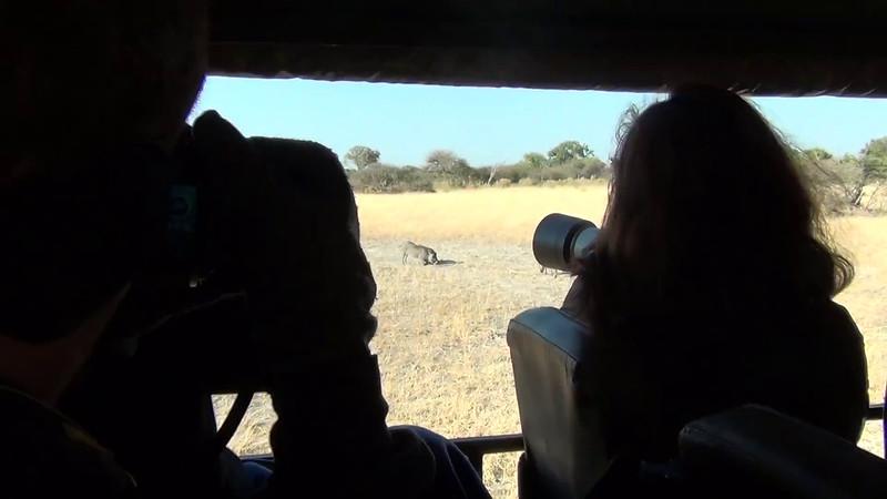 Warthogs Feeding, Moremi Game Reserve, Botswana