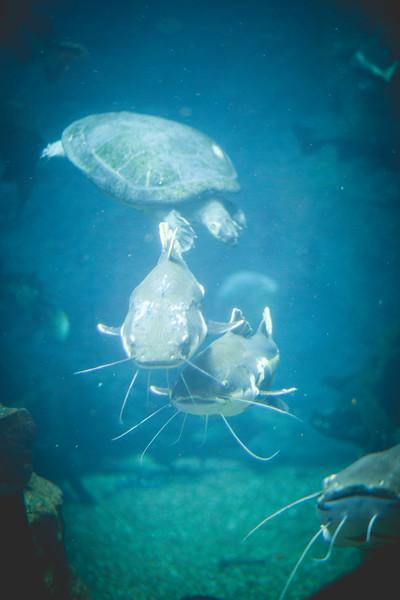 2014 10 25 Dallas World Aquarium-34.jpg