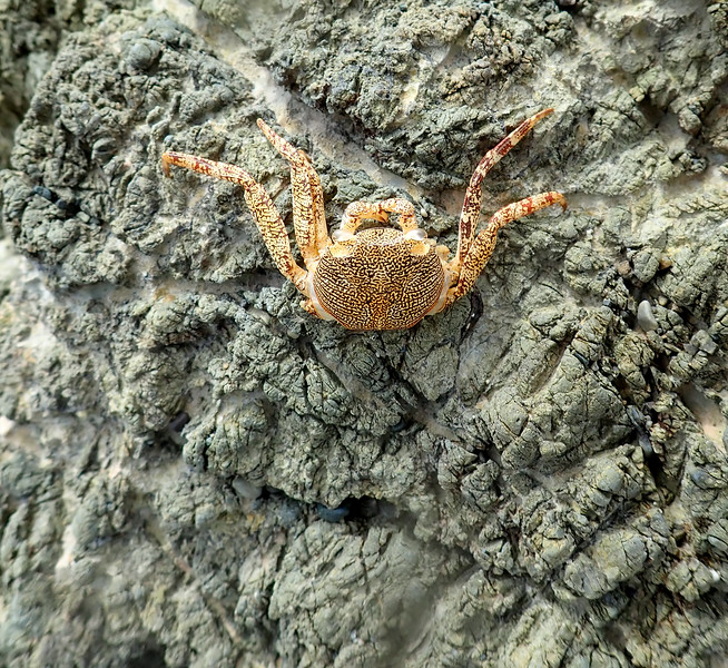 Crab on a rock formation
