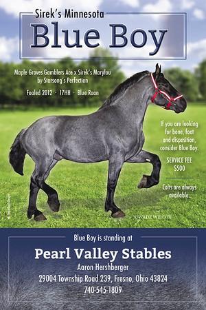 Aaron Hershberger - Pearl Valley Stables