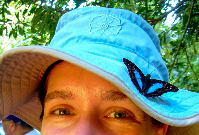 butterfly visit 5.jpg