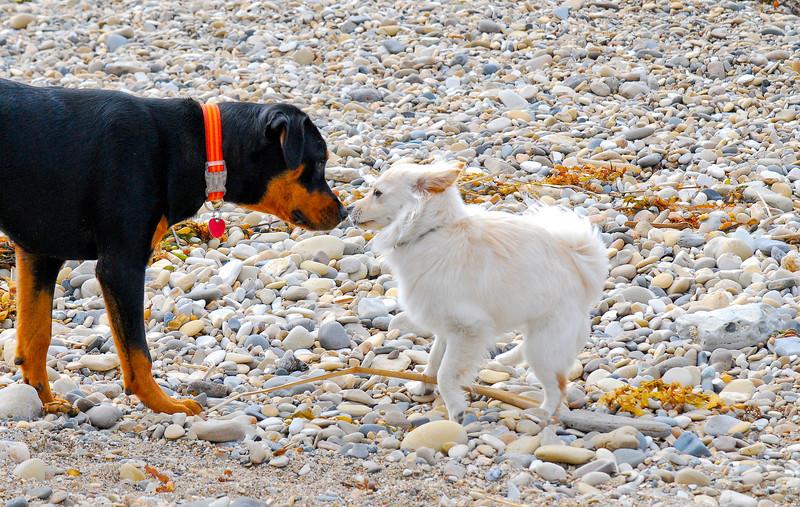 dogs_beach-018.jpg