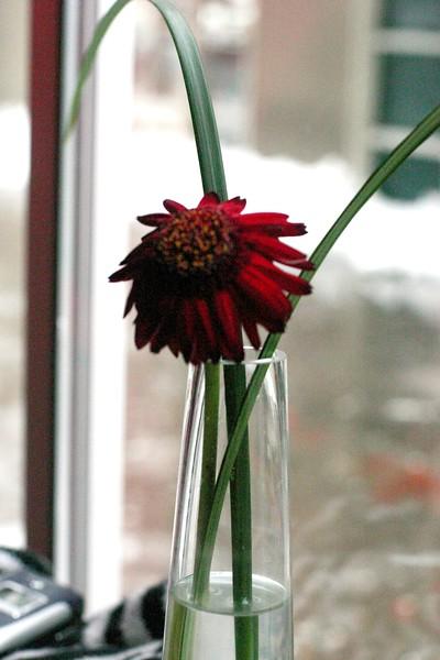 fading-flower_2238692342_o.jpg