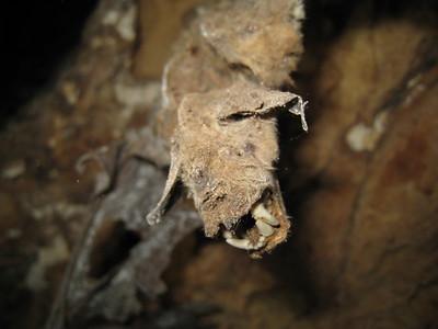 Arnhem Bat Cave
