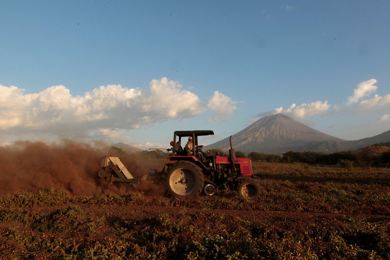 . A worker drives a tractor at a peanut field as ash continues to spew out of the San Cristobal volcano (background), at Chinandega city, some 150 km (93 miles) north of the capital Managua December 26, 2012. The 5,725-foot (1,745-meter) San Cristobal volcano, one of the tallest in Nicaragua, has belched an ash cloud hundreds of meters into the sky in the latest bout of sporadic activity, prompting the evacuation of nearby residents, the government said on Wednesday. REUTERS/Oswaldo Rivas