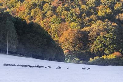 Han safari photo