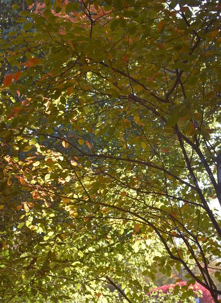 LeavesVert.jpg