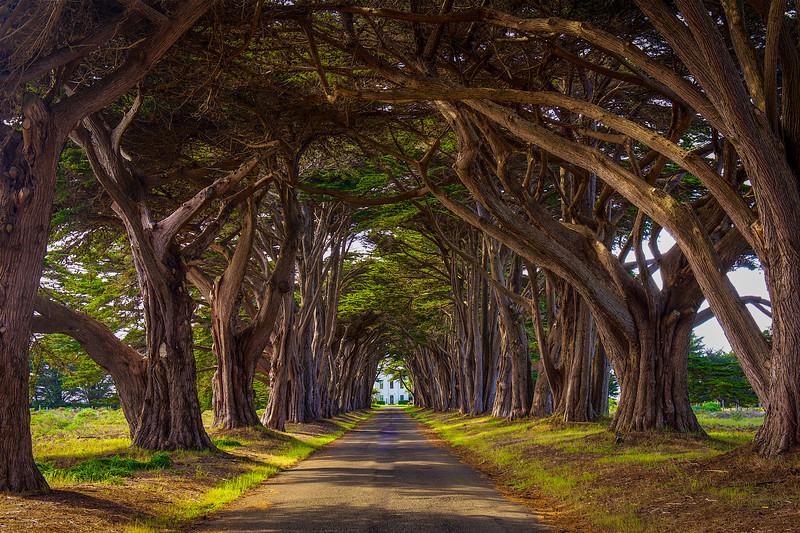 Cypress Tunnel
