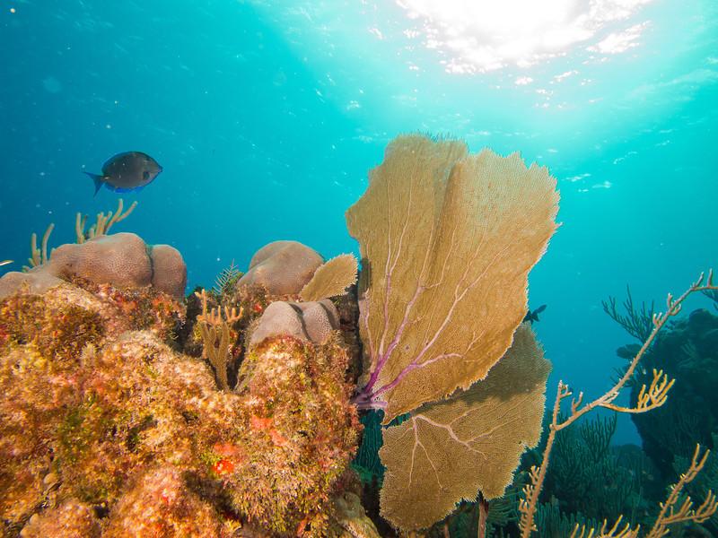 Tulum Trip - Diving 20130405-18-00 _405264904.jpg