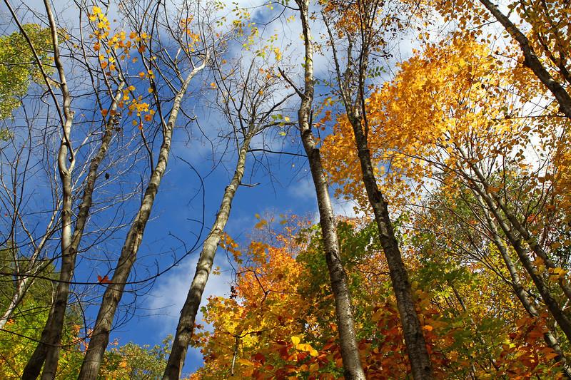 Fall Sky 3.jpg