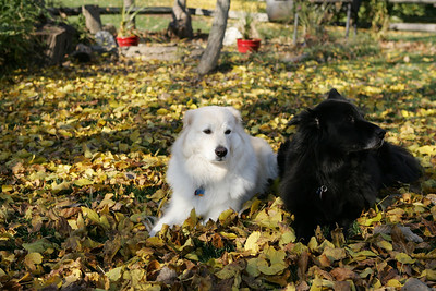 Dogs (Nov 2009)