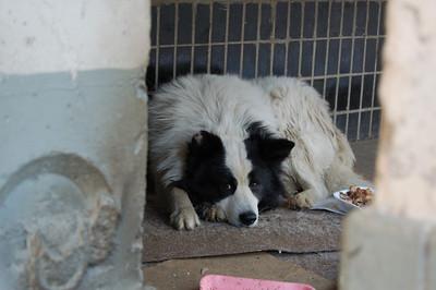 2009-03-27, Bim the dog