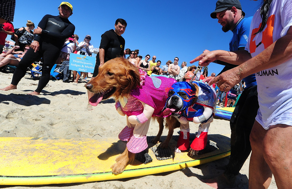 . Hanzo (R) and Kalani (L) get ready to surf in tandem during the 5th Annual Surf Dog competition at Huntington Beach, California, on September 29, 2013.  AFP PHOTO/Frederic J.  BROWN/AFP/Getty Images