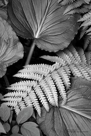 Nature's Art Show Photographs