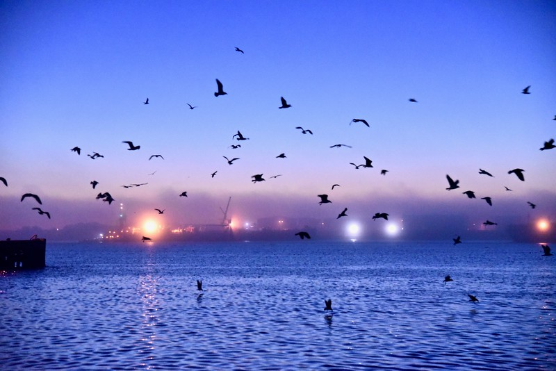 Blue Flock.jpg