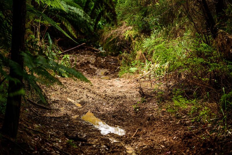 2018 KTM New Zealand Adventure Rallye - Northland (767).jpg