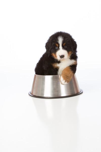 2013-Pearson Pups-Jun02-0340.jpg