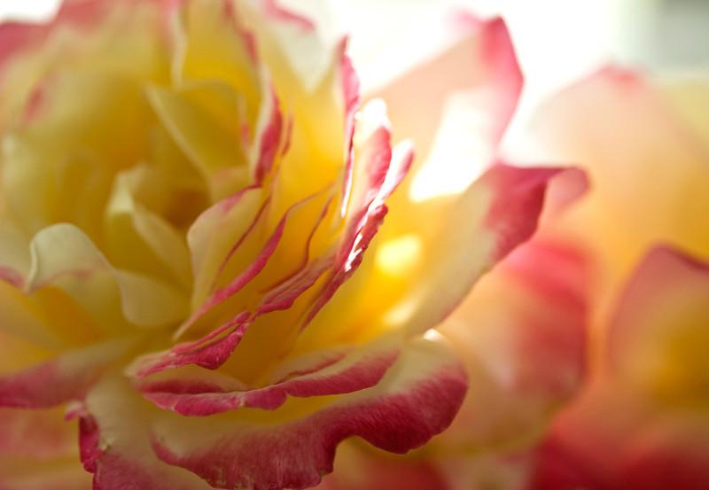 desk_flower2.jpg