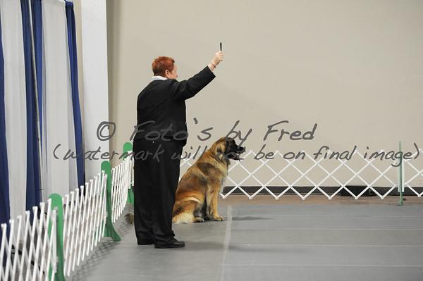 Saturday Obedience