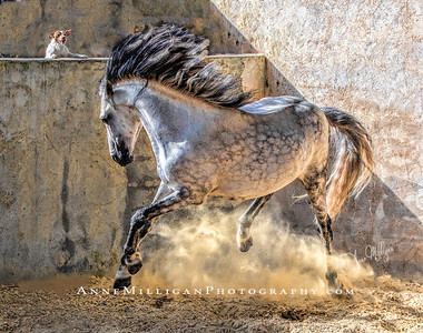 Ride into Time  Equestrian Photography