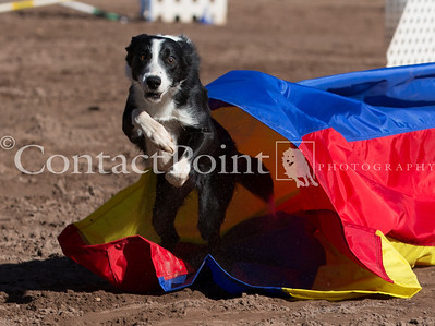Contact Point AKC Agility Trial - February 17, 2013