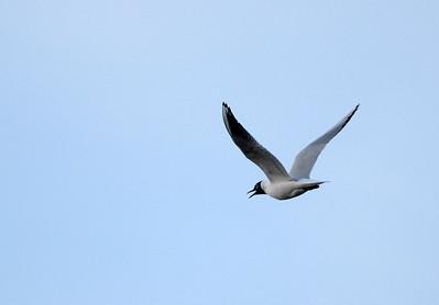 Bird snapshots