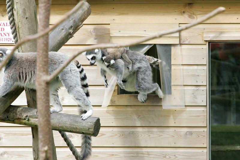 Newquay Zoo 018.jpg