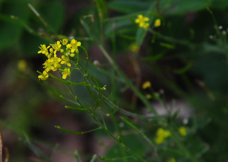 NEA_3015-7x5-Flower.jpg