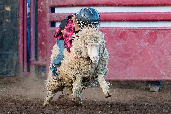 2019 Valley Center Stampede Rodeo - Mutton Busting