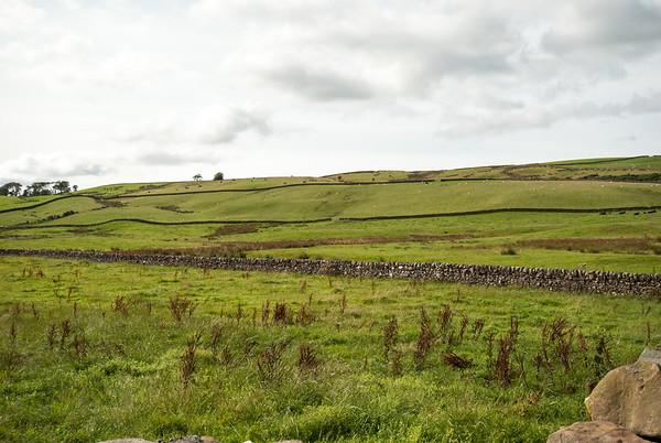 Grazing Sheep in Scotland not far away from Edinburgh